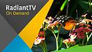 RadiantTV Episode 170502